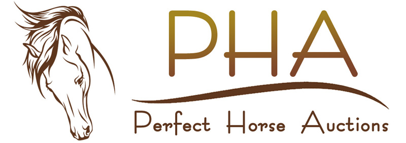 Perfect Horse Auctions